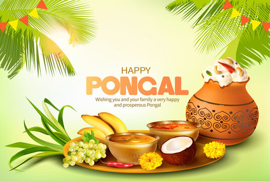 Greeting card with traditional food and clay pot with rice for Indian harvest festival Pongal (Makar Sankranti). Vector illustration.