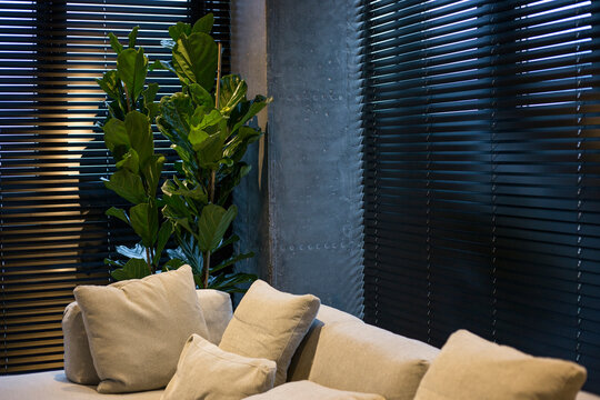 A houseplant is near black wood blinds. Closeup on the window in the interior. Coulisse wooden slats 50mm wide. Venetian blinds closed in the living room. Sand color sofa is near the window.