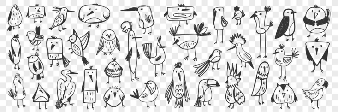 Birds doodle set. Collection of funny hand drawn various kinds of cute wild birds isolated on transparent background. Illustration of owl titmouse penguin pelican toucan parrot for kids