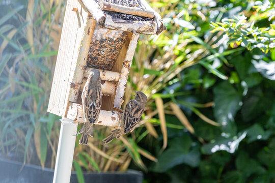 Zwei Spatzen im Vogelhaus