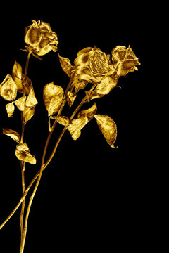 Three golden rose flowers on black background isolated closeup, two long stem gold roses, shiny yellow metal flower bouquet, decorative design element, art floral pattern, beautiful vintage decoration