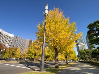 Fototapete - 東京都 丸の内オフィスビル街とイチョウ並木