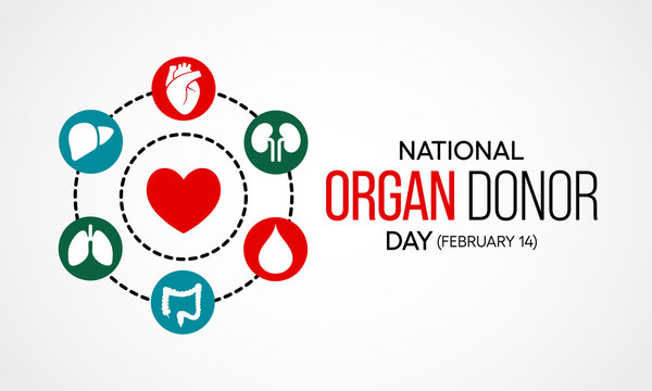 Vector illustration on the theme of National Organ Donor day observed each year on February 14th.