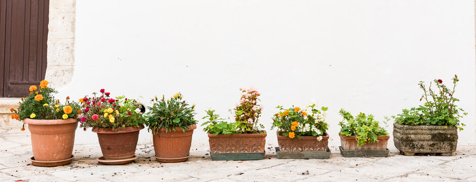 various plants in pots, against white wall. Begonia,  succulent plant, carnation.