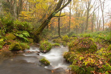 Beautiful scenery of autumn trees and valleys flowing through the forest