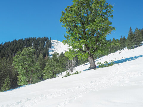 Bayerische Alpen - der erste Schnee im Herbst