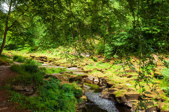 River in the forest. Yorkshire, Great Britain.