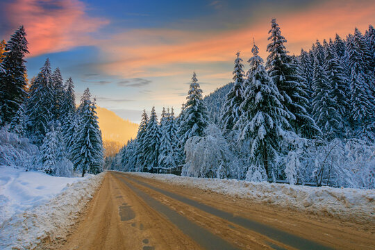 road through mountain landscape in winter. spruce forest covered in snow. dramatic sky with clouds glowing in evening light