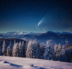 Wall Mural - Bright comet above the winter spruces on a frosty night.
