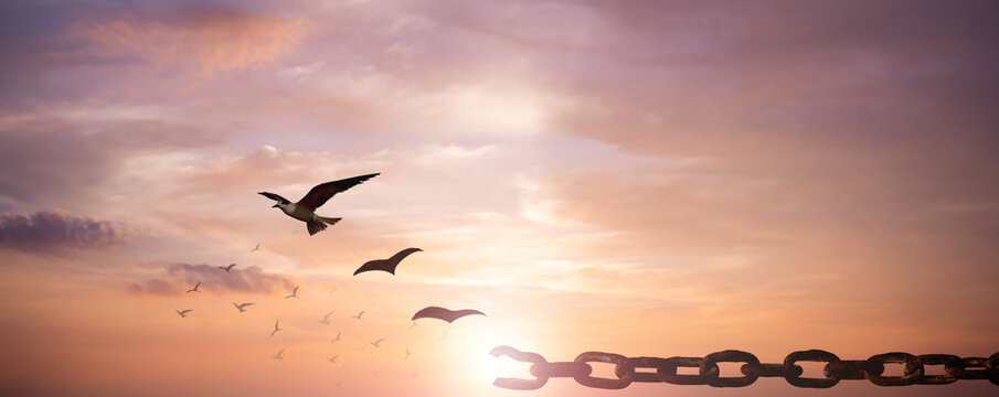 Freedom concept: Silhouette of bird flying and broken chains at sky sunset background
