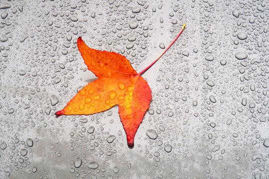 Autumn leaf lying on car hood covered in raindrops