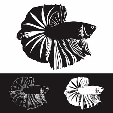 Betta fish silhouette design vector concept for logo or emblem, budge and t shirt printing.