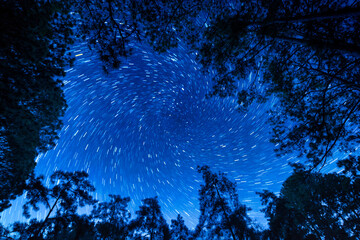 Wall Mural - Landscape with star rail over tree. Night sky with stars. Long exposure photograph.