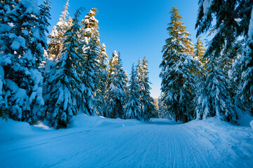 Snow covered road in Mt. Hood National Forest