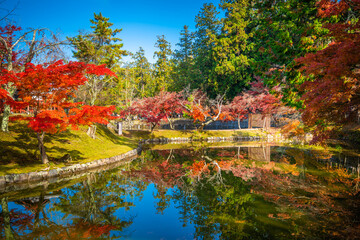 Colorful Japanese maple tree leaves in Nara Park, Nara, Japan