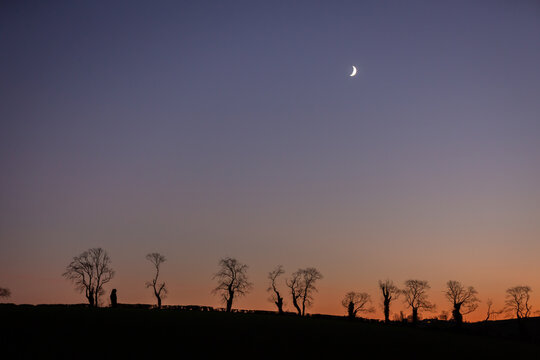 Crescent Moon above silhouetted tree-line