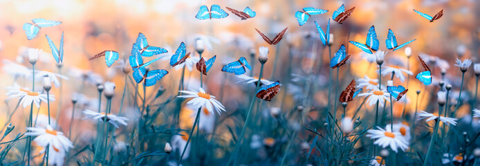 Spring natural landscape with wild flowers on meadow and fluttering butterflies on blue sky background. Dreamy soft air artistic image. Soft focus, author processing.