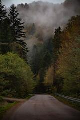 Stara asfaltowa droga przez zamglony las, Bieszczady, Polska