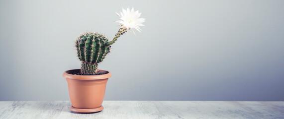 flowering cactus on grey table