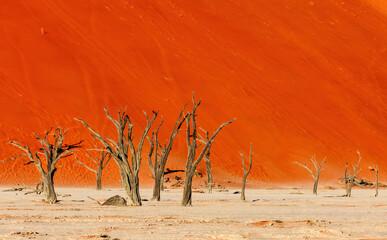 dead acacia tree in hidden Dead Vlei landscape in Namib desert, Namibia arid landscape, Africa wilderness