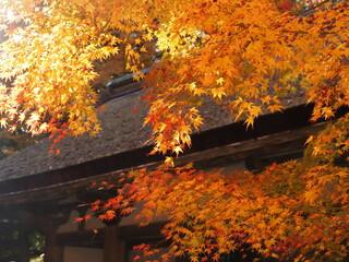 五重塔と紅葉の風景