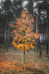 jesienne drzewko