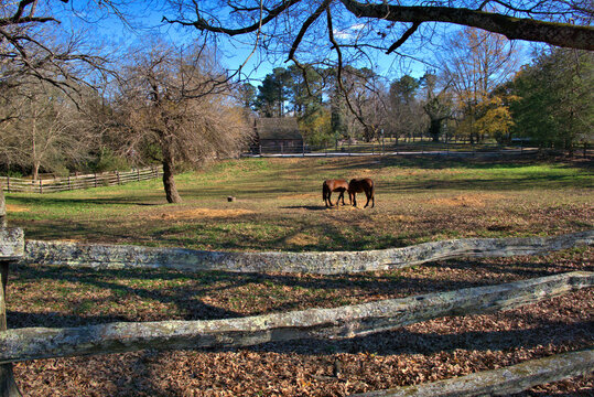 Two Horses grazing in a pasture surrounded by wooden fence