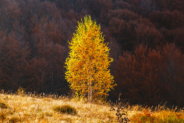 Wall Mural - Incredible autumn landscape in sunny day. Location place of Carpathian mountains, Ukraine, Europe.
