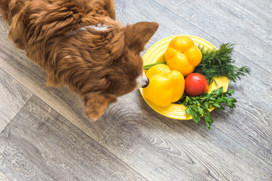 Portrait of a dog with a plate of fresh vegetables
