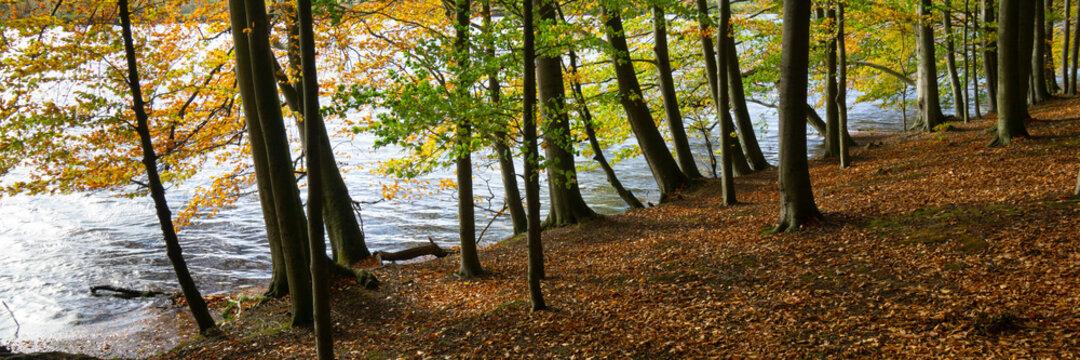 Ruhrstausee, Naturschutzgebiet Bahnwald, Holzwickede, Nordrhein-Westfalen, Deutschland, Europa