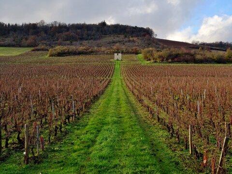 Paysage viticole dans la côte Chalonnaise.