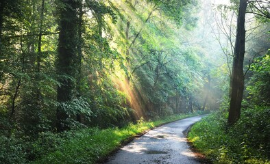 Country road in a majestic green deciduous forest in a morning fog. Tree silhouettes close-up....