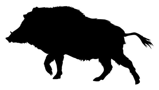 silhouette of a boar