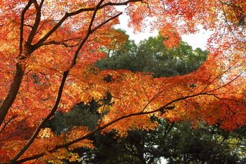 色の違いと陰影でカラフルな色合いになっている紅葉