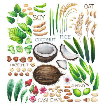 Watercolor collection of various fruits, herbs and nuts as ingredients for a plant based milk