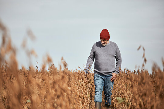 Farmer wearing knit hat examining crop while walking in field against clear sky
