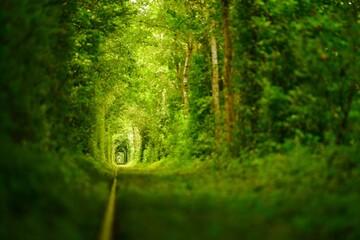 Tunnel of love near Klevan, Ukraine