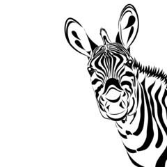 Fototapeta Zebra isolated on white background, vector illustration. Good for print, cover, background, logo, icon, avatar