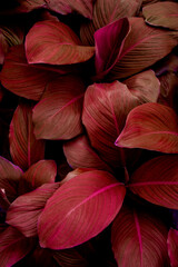Wall Mural - abstract purple leaf texture, nature pattern background, tropical leaf