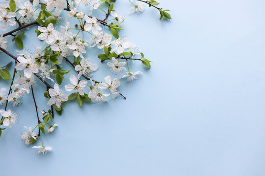 mockup of a spring postcard. blossoming cherry branch and place for text. congratulation. invitation