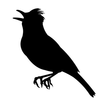 Vector silhouette of a sitting and singing lark