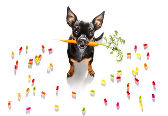 dog eating sweet candies or chewing bubble gum