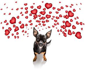 happy birthday  valeintines dog