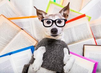 dog reading books