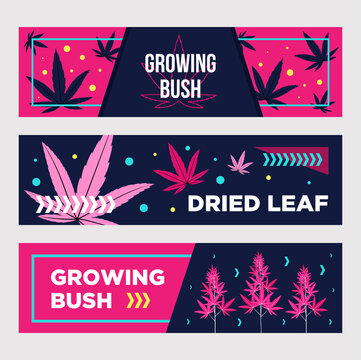 Vivid promotional banner designs with cannabis. Bright pink dried leaves and growing bushes on dark background. Hemp and legal drug concept. Template for poster, promotion or web design