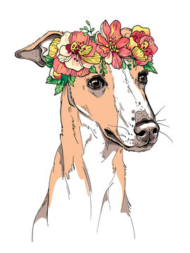 Cute whippet dog in a flower wreath. Spring portrait of a dog. Stylish image for printing on any surface