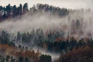 morning fog and mist in the forest