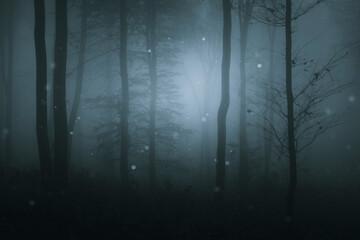 fantasy forest, woods landscape in fog