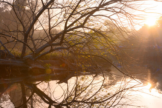 landscape morning time with tree branch over foggy river in sunrise at Khao Yai forest, Thailand