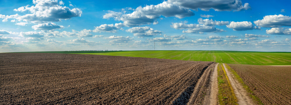 plowed field and grren fresh wheat dirt road in spring, beautiful blue sky with clouds